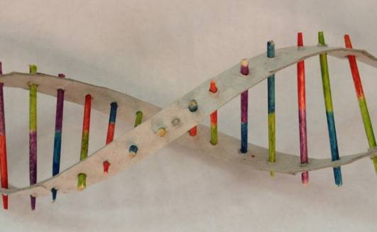 dna science project Dna science project build a dna model to help further understand how dna is structured, build a model of it this is a simplified model of dna, but it will still.